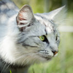 avabellacats_09