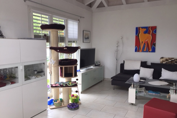 avabellacats_zuhause-1