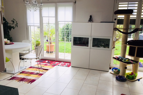 avabellacats_zuhause-3