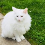 avabellacats_eaven-5