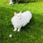 avabellacats_eaven-6